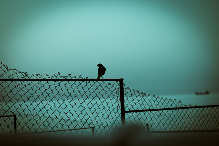 Silhouette of bird on fence against clear sky