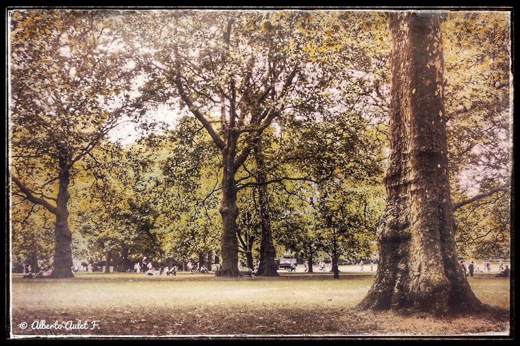 Imagen: Green Park (Londres) Tree Transfer Print Autumn Auto Post Production Filter Change Season  Tree Trunk Tranquil Scene Scenics Nature Branch Growth Beauty In Nature Park - Man Made Space Day Outdoors Non-urban Scene Green Color Footpath