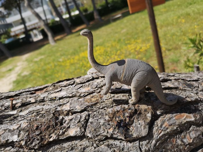 Dinosaur Toy Jurassic Park No People Reptile Shadow Close-up Tree Trunk