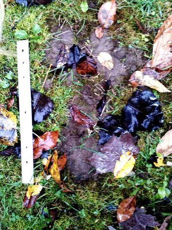 Happy Halloween Bigfoot Sasquatch Footprints Bigfootisreal Nature On Your Doorstep Check This Out Outdoors Nature Enjoying Life