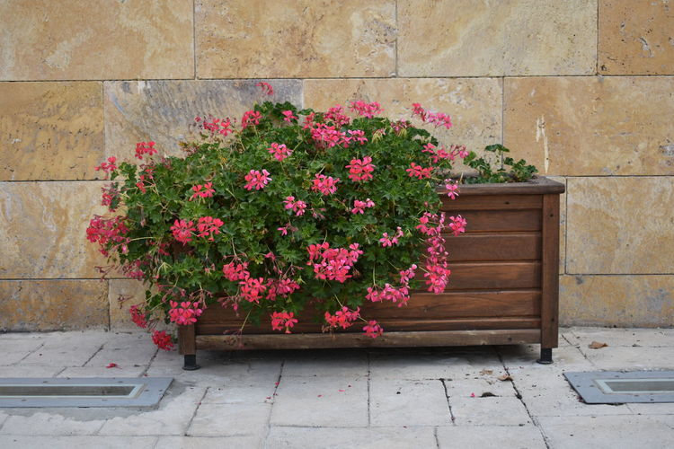 çiçek Pembe çiçek Flower Flowering Plant Plant Beauty In Nature Pink Color Wall - Building Feature Flower Head Nature Freshness