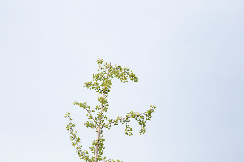 Clear Sky Growth Leaf Nature Outdoors Plant Springtime Tree