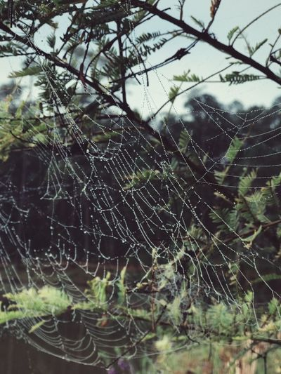 Spider Web Plant Fragility No People Nature Vulnerability  Autumn Mood Water Wet Day