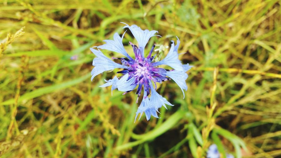 Taking Photos Beautiful Nature Blue Flower In The Field Enyoing Life Sunshine ☀ Walk Have A Lot Of Fun