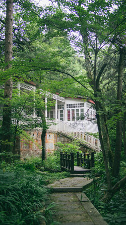 Architecture Beauty In Nature Built Structure Documentary Footpath Forest Green Green Color Growth Lushan Nature Outdoors Photograph Traveling Tree Villa