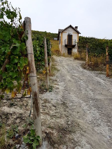 Agriculture Outdoors Day No People Sky Leaves In Autumn Freshness Tranquility Agriculture Vineyard Cultivation Travel Destinations Langhe Piedmont Italy Barolo Vineyards Autumn Vineyards In Autumn Vineyard Small House Rural Scene Beauty In Nature Rural Building