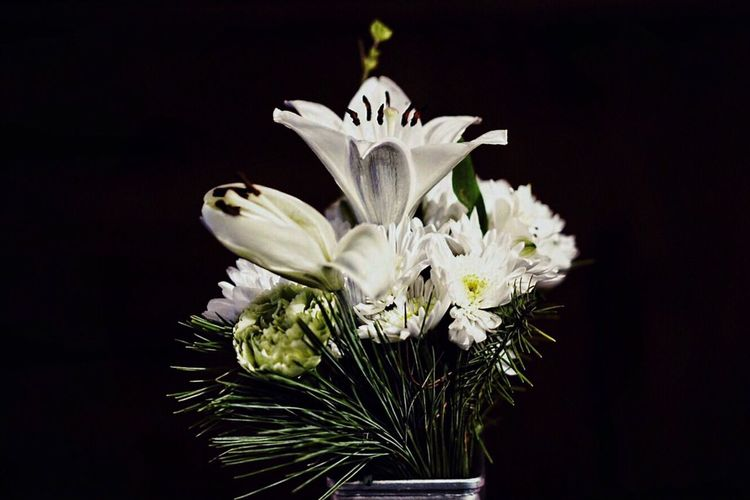 Lily flower bouquet Lilies In Bloom Lilies Lily Flower Lily White Flowers White Flower Flower Head Flowers Flower Bouquet  Flower Flower Head Fragility Petal Freshness Studio Shot No People Close-up Black Background