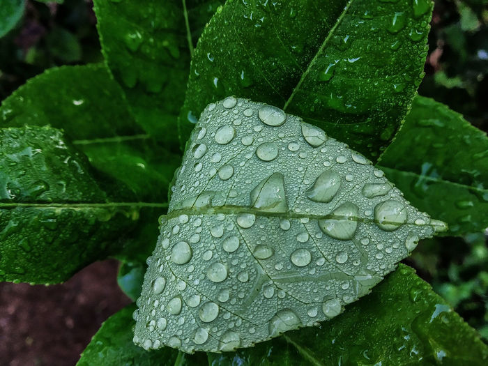 natural beutty Water Drops Rain Water Drop Outdoors Outdoor Green Green Color Phone Photography EyeEm EyeEm Gallery Eyeemphotography Eyeem Market