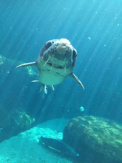 Fish Smile
