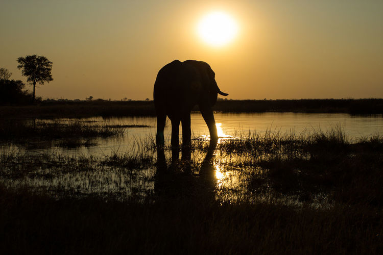 Silhouette Elephant Standing By Lake Against Sky During Sunset
