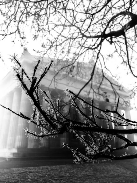 Black & White Icicles Boughs Frost-covered Still Life Walhalla Memorial Winter Trees ıce