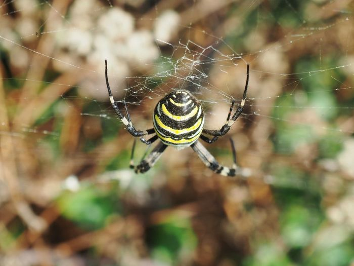 Zebra spider Point Of View Angle Web Complexity Animal Leg Insect Spider Web Spider Survival Trapped Close-up Arachnid Symmetry