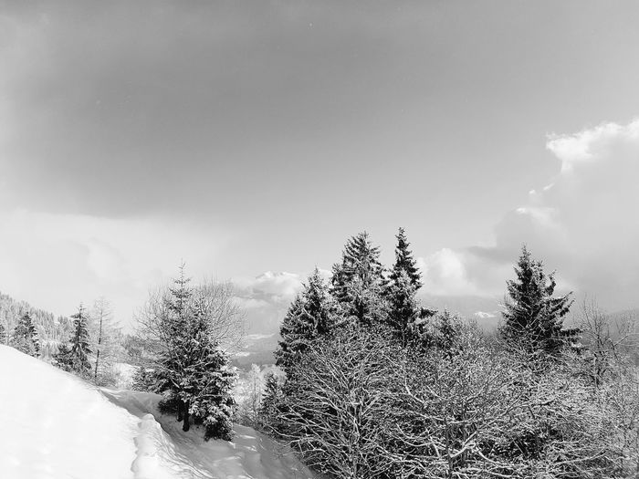 Cold Outside Cold Winter ❄⛄ Snow ❄ Outdoors Sky Blackandwhite Black & White