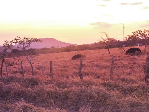 Tranquil Scene Nature Beauty In Nature Sky Tranquility Sunset Field Scenics Scenery No People Landscape Outdoors Growth Grass Bare Tree Mountain Day Costa Rica Costa Rica Sunset Remote Remote Location Peaceful Sunset_collection Fence Grassland