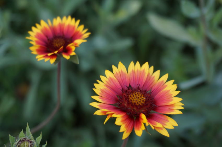Flower Plant Nature Fragility Beauty In Nature Flower Head Close-up No People No Filter Twins