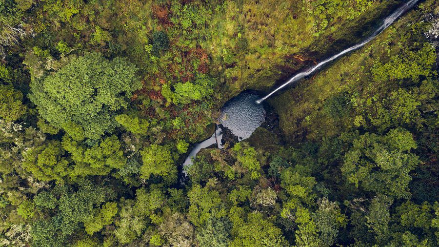 Drone top view of green forest and unseen deep waterfall. Drone  DJI Mavic Pro DJI X Eyeem High Angle View Top View Top Perspective Aerial View Waterfall No People Non-urban Scene Rural Scene Nature Beauty In Nature Water Outdoors Forest Madeira Island Above Environment Environmental Conservation Directly Above Scenics - Nature Tranquility Travel Destinations Tourist Attraction