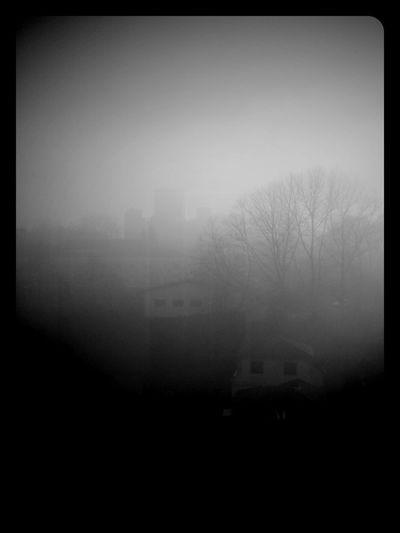 Foggy morning Taking Photos Enjoying Life Hello World