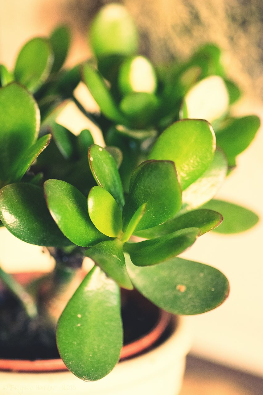 green color, close-up, leaf, indoors, no people, food and drink, growth, food, freshness, nature, day
