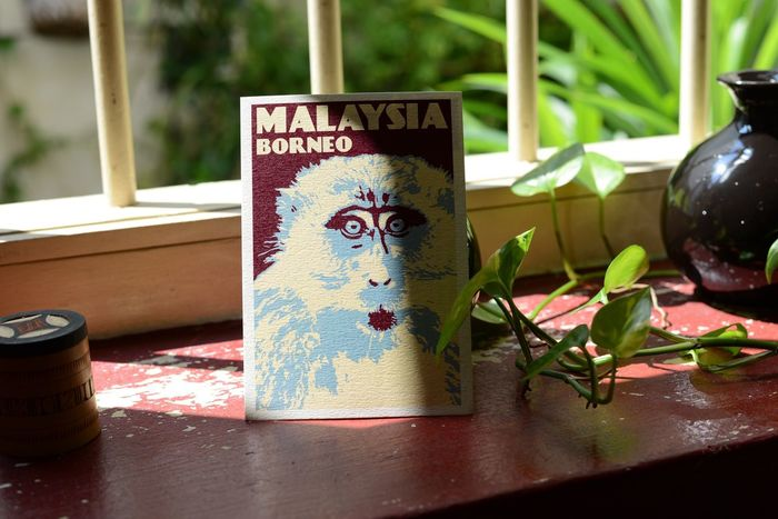 Monkey Borneo Postcard Malaysia Text Communication Day No People Close-up Indoors