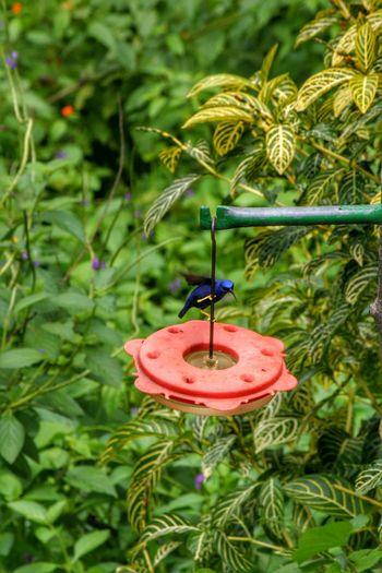 Trinidad And Tobago Hdrphotography HDR Birds🐦⛅ Best Shots EyeEm Bird Photography Bird Posing