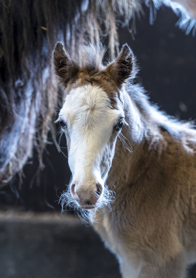 Animal Themes Close-up Cold Temperature Domestic Animals Foal Horse In Stable Livestock Mammal Nature No People One Animal Portrait Welsh Cob