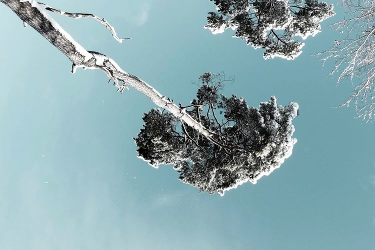 Low angle view of frozen plant against sky
