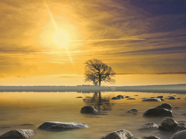 Single tree landscape Sky Water Scenics - Nature Beauty In Nature Sunset Tranquility Cloud - Sky Sea Tranquil Scene Orange Color Nature Land Reflection Sun Rock Horizon Solid Sunlight Idyllic Horizon Over Water No People Outdoors