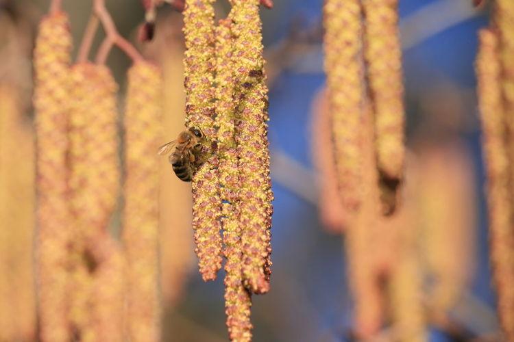 Bee 🐝 Animal
