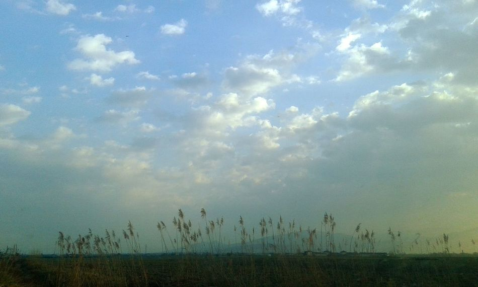 Campi Natura Nature Paesaggi Paesaggio Landscapes Landscape_photography Landscape_Collection Landscape Luce Sunny Day Cielo Sky Nuvole Cloud Clouds Clouds And Sky