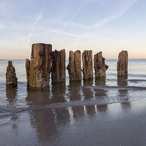 Buhnenreste Bühne Buhnenreste Groin Groyn sylt list königshafen nordsee northsea barnacles seepocken eveningsky