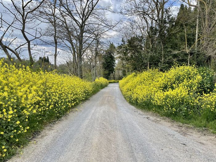 Road amidst trees and yellow flowering plants