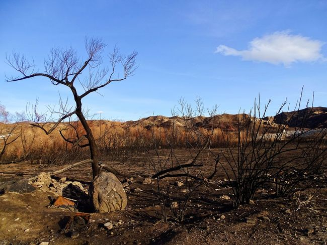 Creek Fire Burned Tree Bare Tree Landscape Nature Dead Plant Outdoors