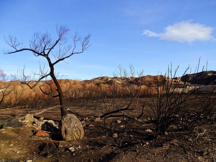 Creek Fire Burned Tree Bare Tree Landscape Nature Dead Plant Outdoors