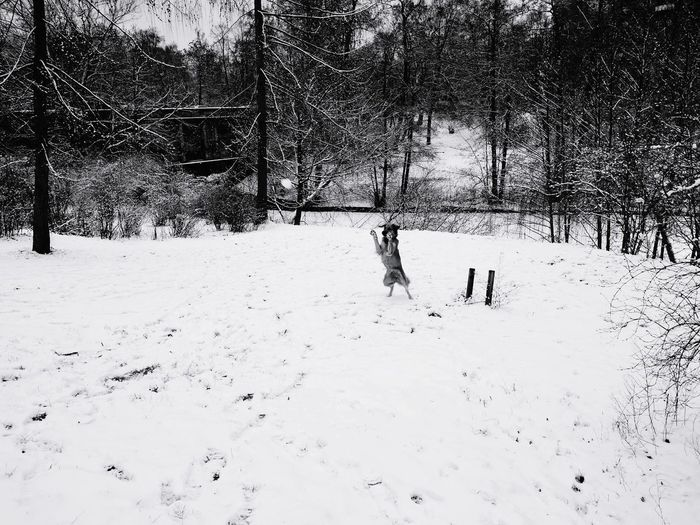 Berlin Ready To Catch Snowball ⛄ Dog