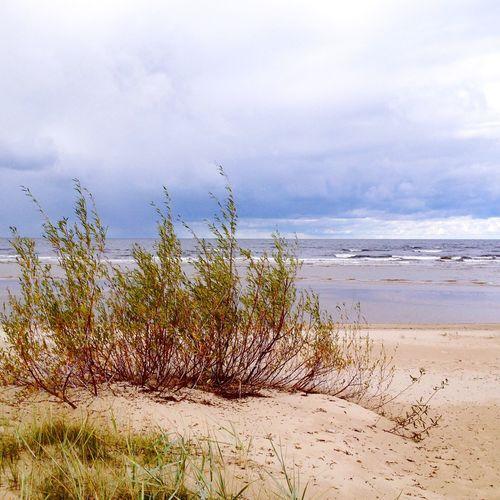 Sea Beach Baltic Sea Here Belongs To Me