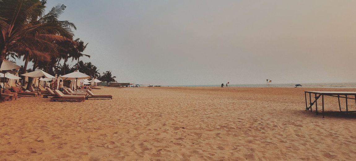 beach addiction Tree Beach Sand Sky