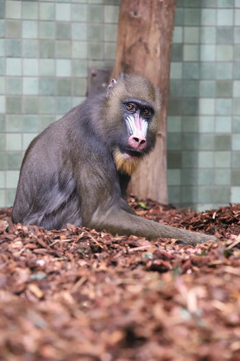 Monkey sitting on a land