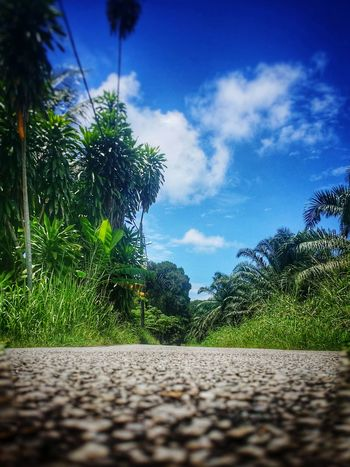 Deeper into village Road Blue Sky Greenery Tree Blue Palm Tree Sky Cloud - Sky Green Color Coconut Palm Tree Tropical Tree Palm Leaf Tropical Climate Scenics Tranquil Scene EyeEmNewHere