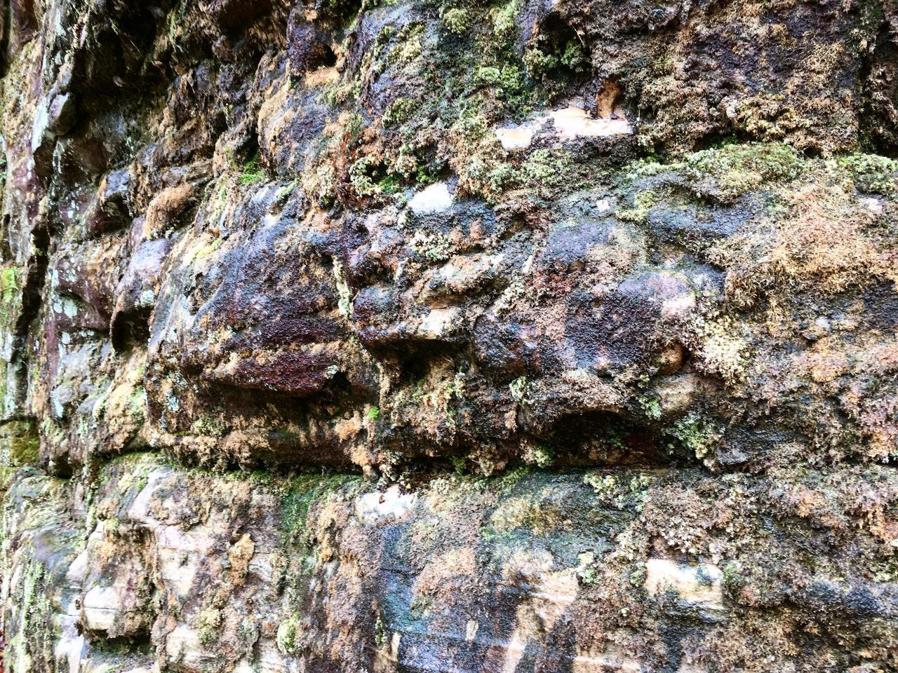 textured, full frame, backgrounds, rough, close-up, no people, day, rock, solid, rock - object, outdoors, pattern, nature, growth, tree, plant, weathered, tree trunk, rock formation, built structure, bark, lichen, textured effect