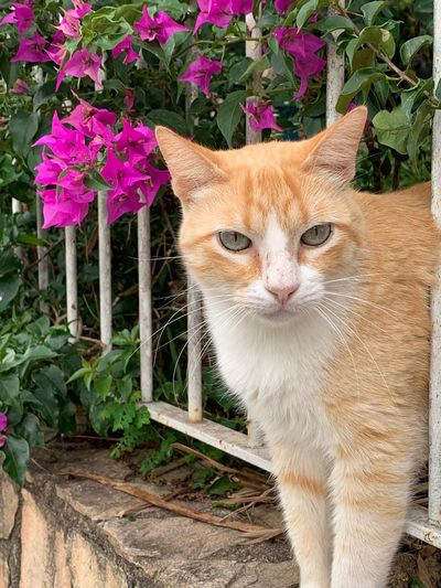 Animal One Animal Animal Themes Mammal Vertebrate Pets Plant Domestic Animals No People Domestic Feline Nature Portrait Domestic Cat Flower Looking At Camera Cat Day Outdoors Flowering Plant