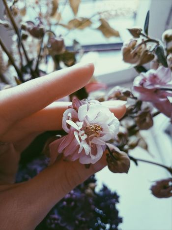 In My Arms Flower Fragility Plant Freshness Human Hand No People Happiness