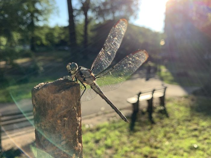 Close-up of dragonfly on wooden post