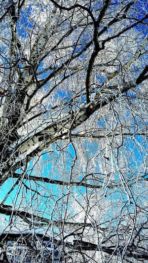 Russian Nature Winter Tree Nature Sky Sunny Day 🌞