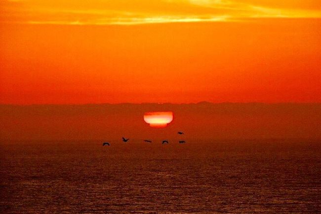 Check This Out Capture The Moment For My Friends That Connect My Favorites Sunsets Sunset Lovers Magic Sunset Sundown...♥ Birds In Flight Beautiful Sunset Sunset_captures Sea And Sunset Sun Through The Clouds Sea And Sun Sunset And Clouds  I Love This Pic The Purist (no Edit, No Filter) Reñaca Beach , Chile