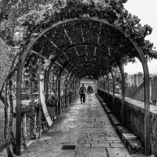 Forgotten Photo from Holidays 😉 Vineyard Tunnel around Paucastle 😀 Pau Castle RainyDay Chateaudepau Vignes Raisins Blackandwhite Arch Tree Pedestrian Walkway Archway Noir Et Blanc Iphonephotography IPhoneography Iphonographie Iphonegraphy EyeEm IPhoneography Outofthephone Iphoneonly Mobilephotography