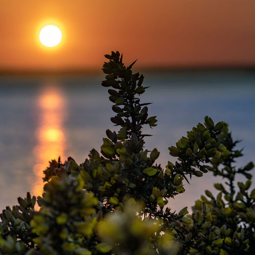 Sunset Sky Beauty In Nature Water Plant Sea Scenics - Nature Tranquility Tranquil Scene Nature Growth Sun No People Horizon Over Water Orange Color Horizon Non-urban Scene Idyllic Beach Outdoors
