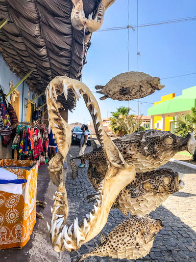 Display at souvenir shop in La Palmeira, Sal Island, Cabo Verde Market Large Group Of Objects Shark Pufferfish Shop