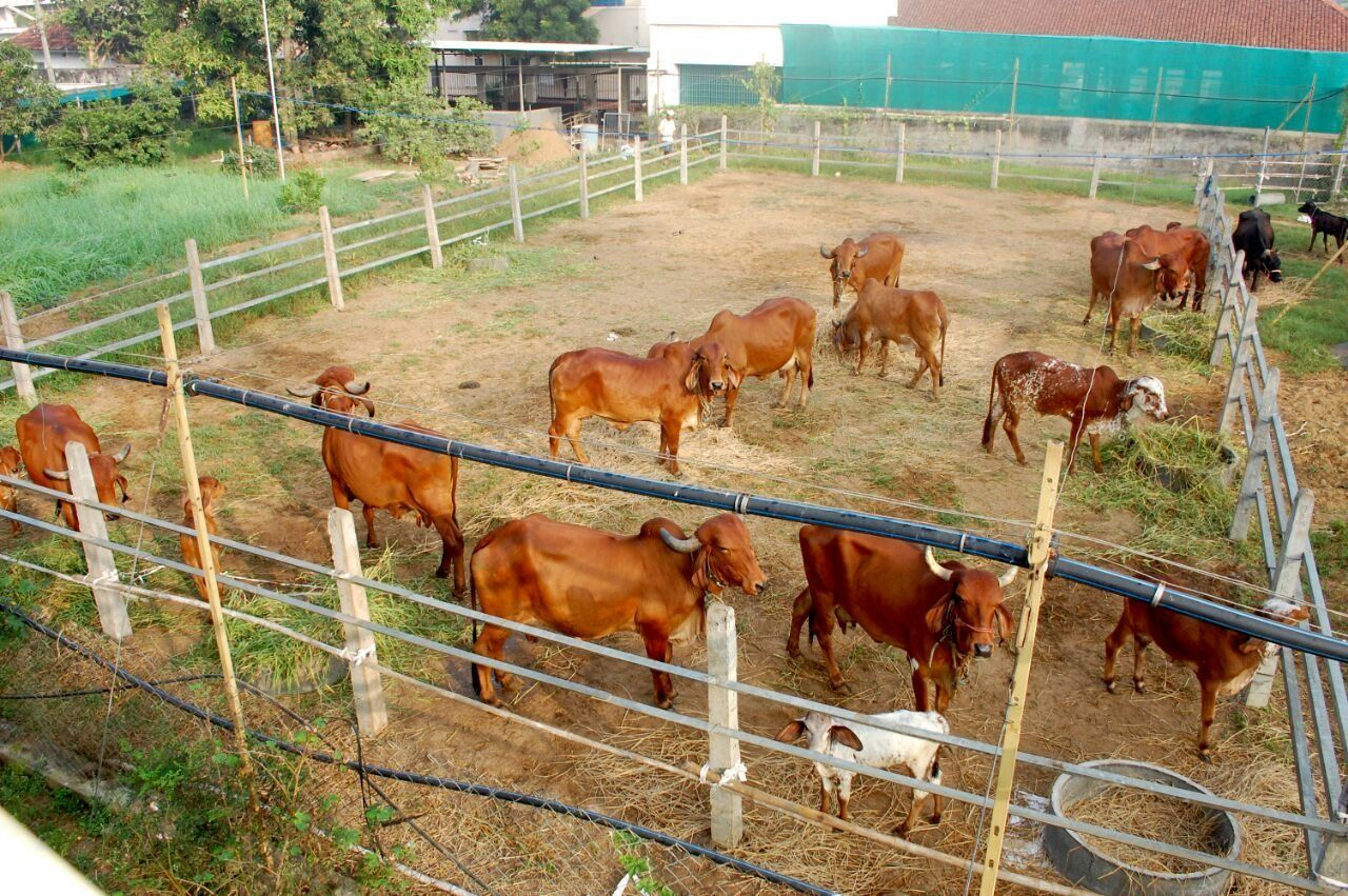 domestic animals, livestock, cow, mammal, animal themes, cattle, farm, field, animal pen, grass, paddock, large group of animals, farm animal, day, agriculture, grazing, outdoors, rural scene, no people, nature, tree