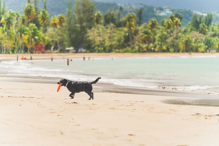 View of a dog on beach