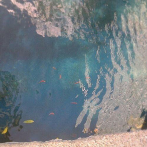 Baby koi fishes Koi Fish Eastwood